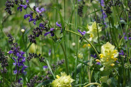 Blumenwiese7_Sent.jpg