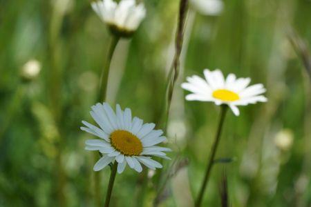 Blumenwiese8_Sent.jpg