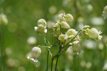 Blumenwiese5_Sent.jpg