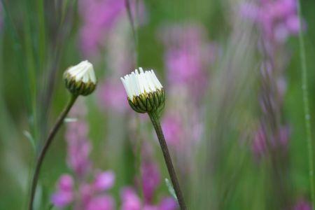 Blumenwiese2_Sent.jpg