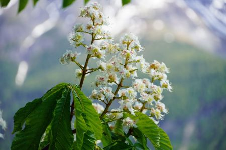 Blüten am Baum.jpg